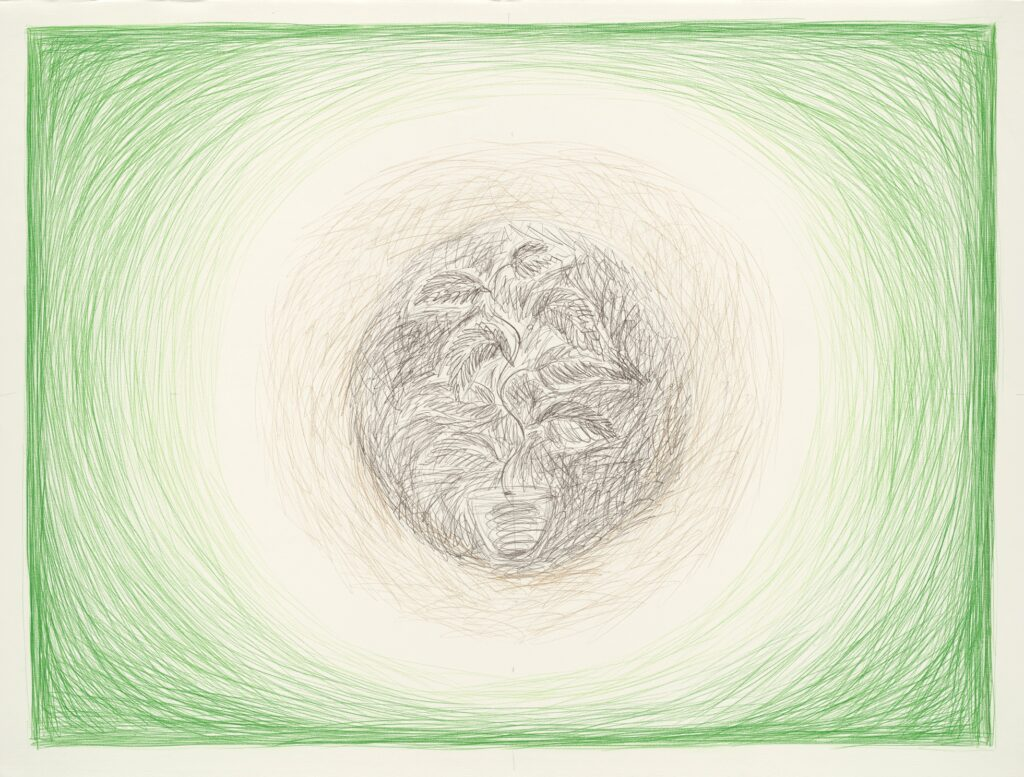 Plant III. Coloured pencil on paper. 120 x 160 cm. 2013.